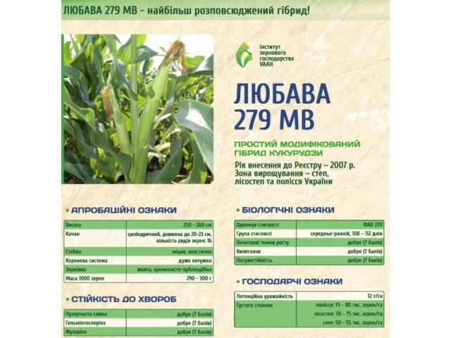 Семена кукурузы Любава