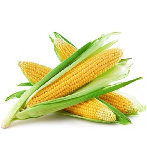 Гибрид кукурузы Оржица